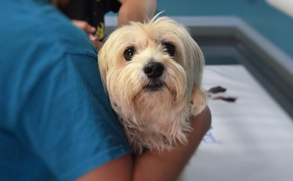 7 consejos para atraer más clientes a una clínica veterinaria o a cualquier negocio veterinario